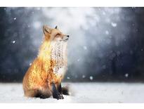 雪中之狼-小攸的工作室